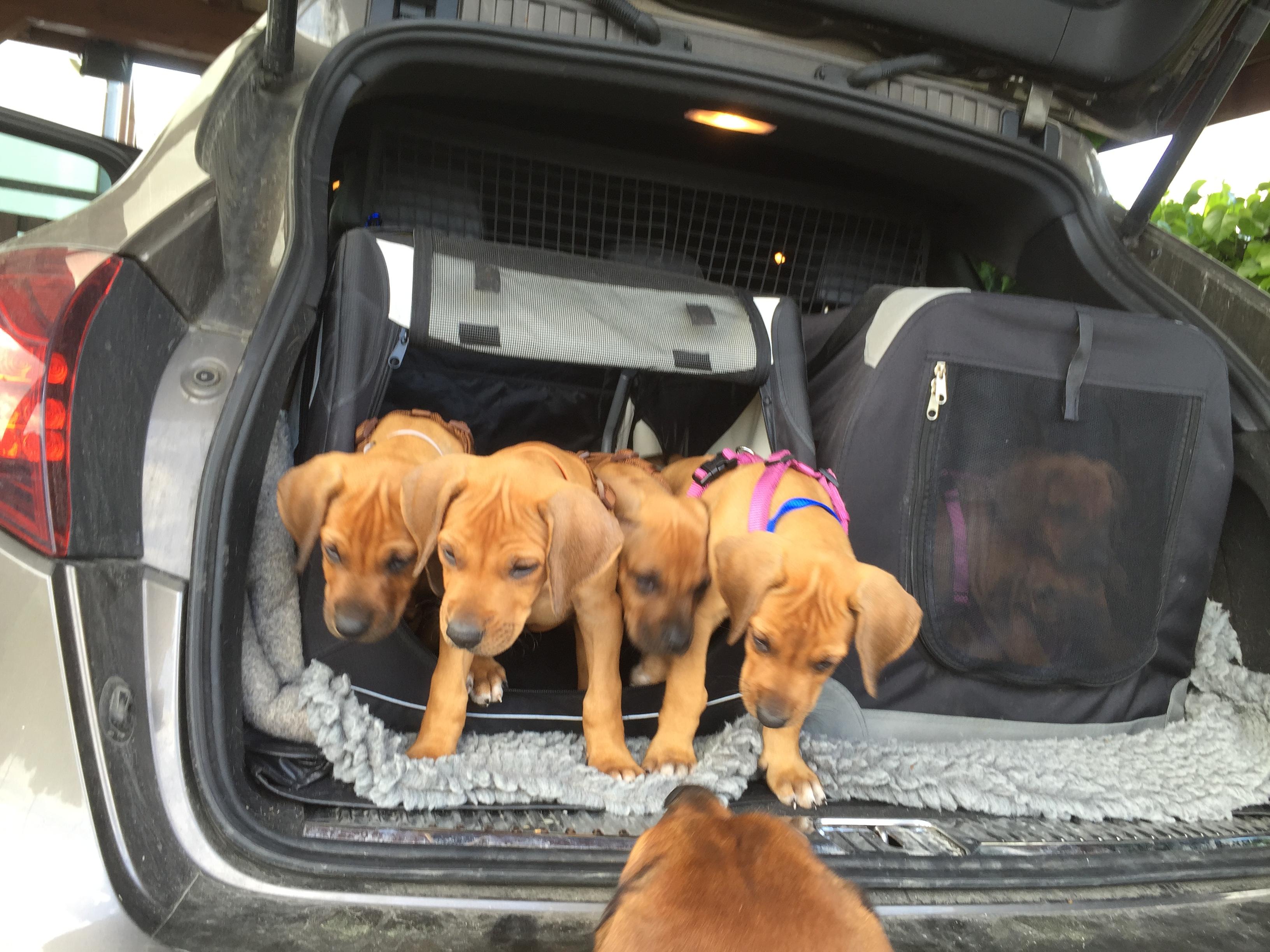 Pippies im Auto