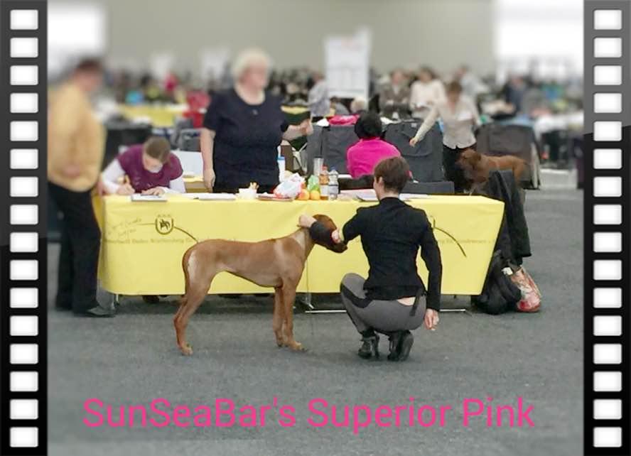 SunSeaBar's Superior Pink DogShow